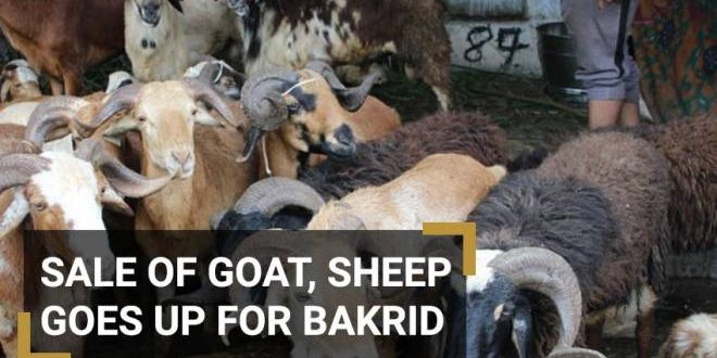 Telangana: Sheep prices shoot ahead of Bakri-Eid – The Siasat Daily