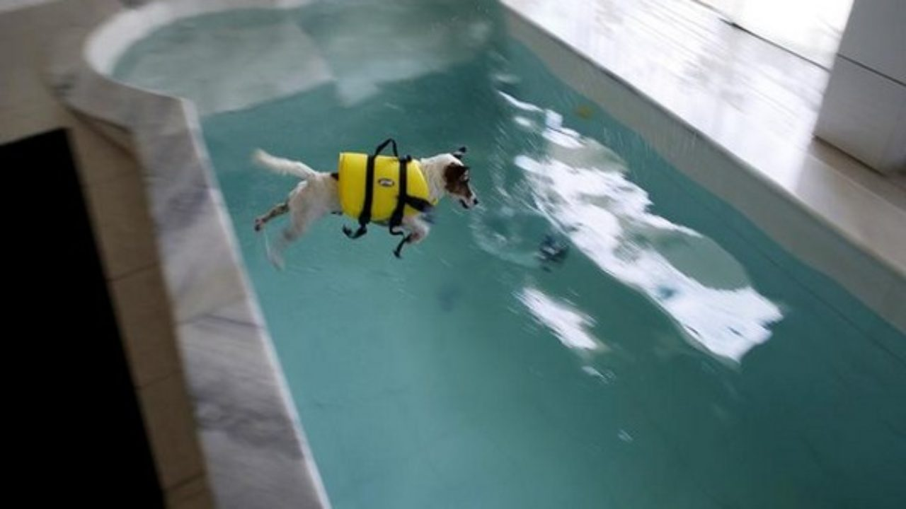 Now A Swimming Pool Just For Dogs
